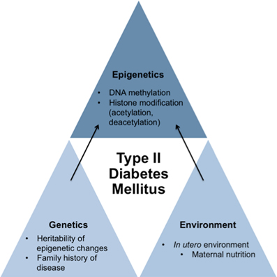Frontiers | Epigenetics and type II diabetes mellitus: underlying  mechanisms of prenatal predisposition | Cell and Developmental Biology