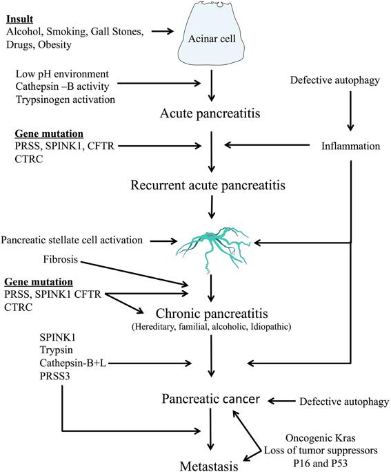 Pancreatic cancer pathophysiology