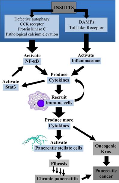 pancreatic cancer pathophysiology)