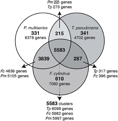 Frontiers transcriptional responses of three model diatoms to frontiersin ccuart Choice Image