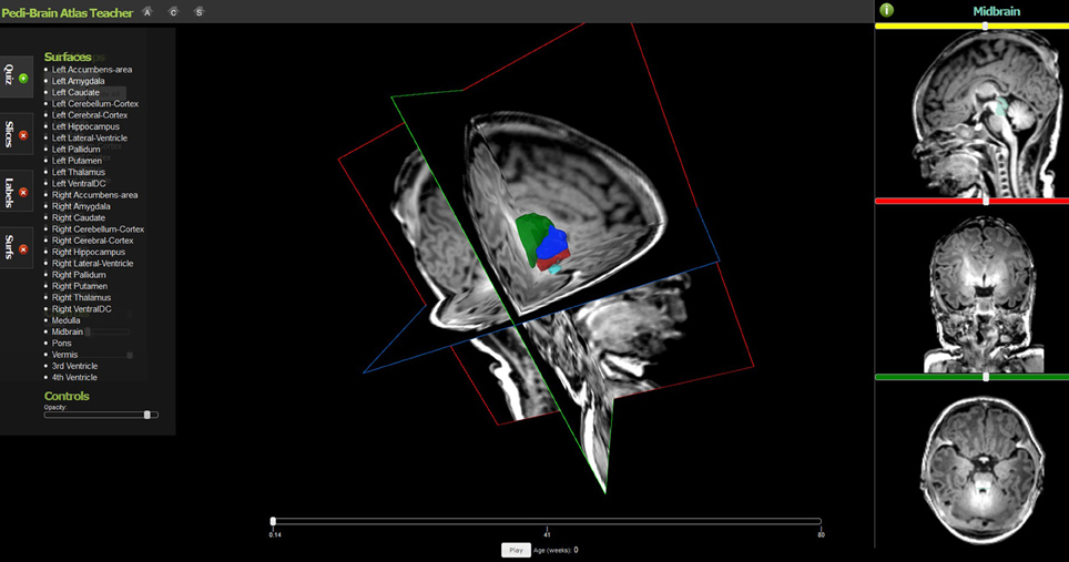 Frontiers | Web based tools for visualizing imaging data and