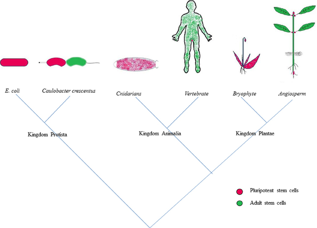 Frontiers | Competence and regulatory interactions during