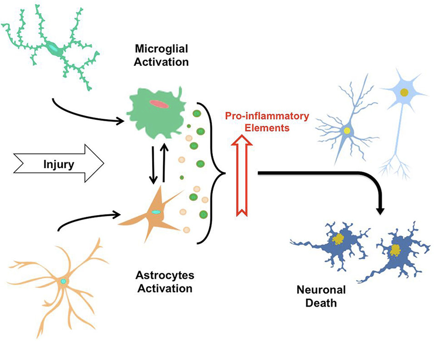 Microglial and neurological disorder essay
