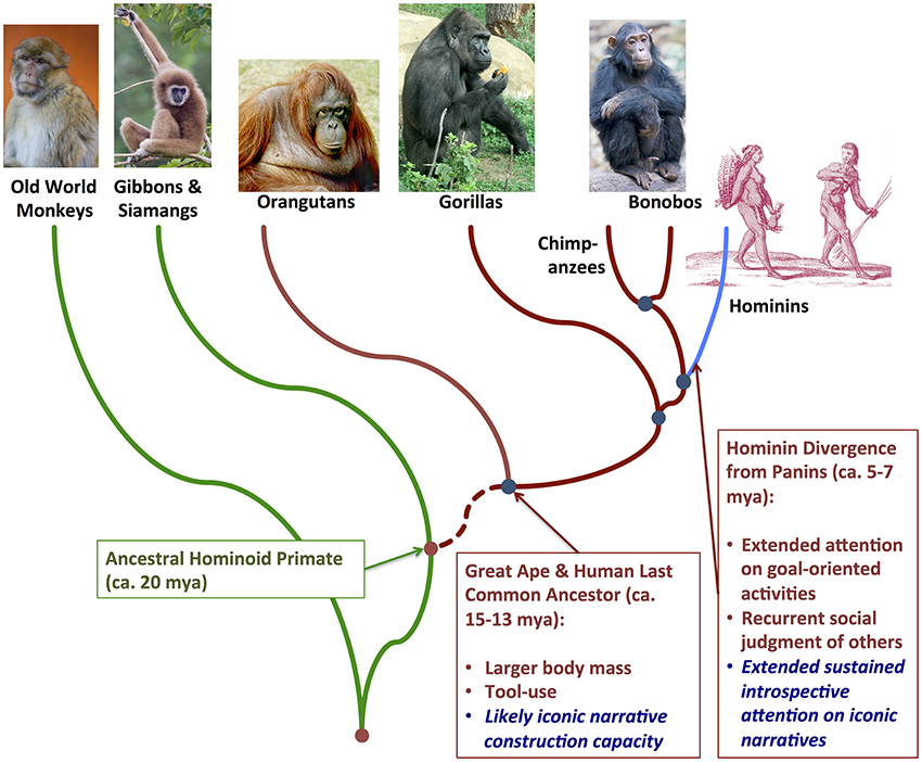 Frontiers | Embodied niche construction in the hominin ...