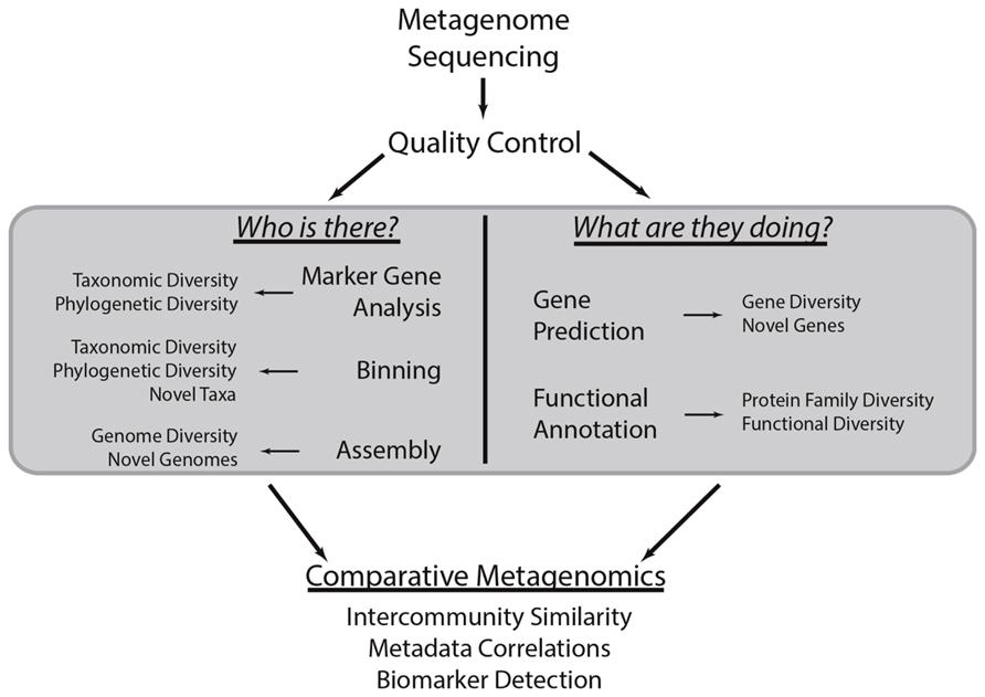Define whole genome shotgun approach dating