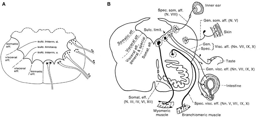 sea fox wiring diagram