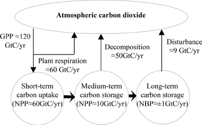 Frontiers modeling the carbon and nitrogen cycles environmental frontiersin ccuart Image collections