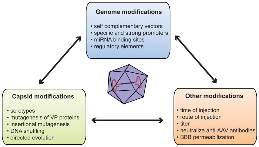 frontiers systemic gene delivery to the central nervous system