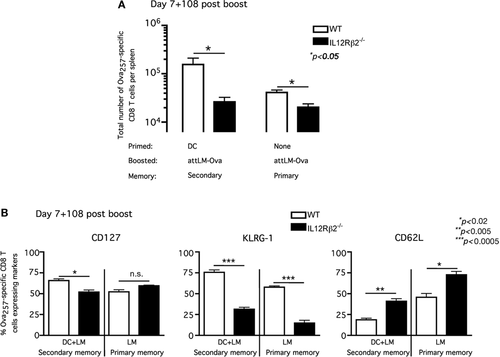 cd8 effector and memory t cells differentiation The role of t-bet and eomesodermin in effector and memory cd8+ t cell differentiation andrew michael intlekofer, university of pennsylvania abstract.