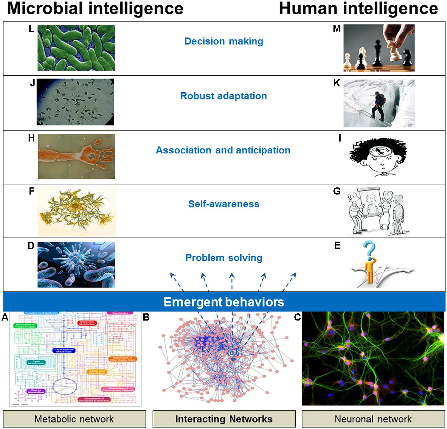 Frontiers Macromolecular Networks And Intelligence In