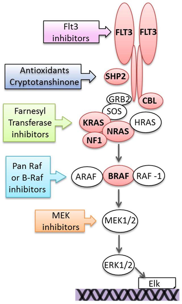 frontiers   ras/raf/mek/erk pathway activation in childhood acute
