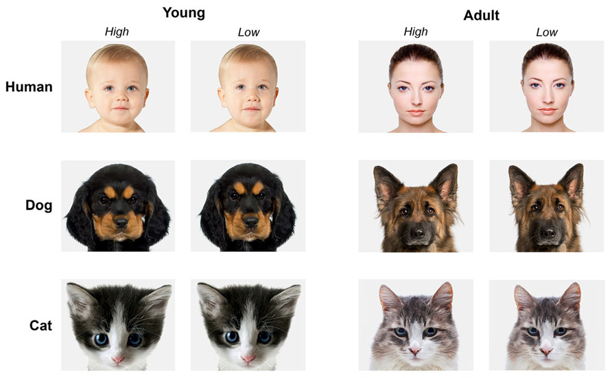 comparing the emotions of humans and animals The compare and contrasting can be seen in animals too, not just humans  emotions, personality and many  animal farm compare and contrast napoleon and snowball.