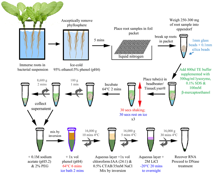 an overview of the dna extraction and analysis of the plant experimentation Introduction extraction of macromolecules such as dna, rna, and protein is one of the basic methods used in molecular biology the process of extraction and purification of nucleic acids has evolved from being a complex, prolonged, and labor-intensive procedure.