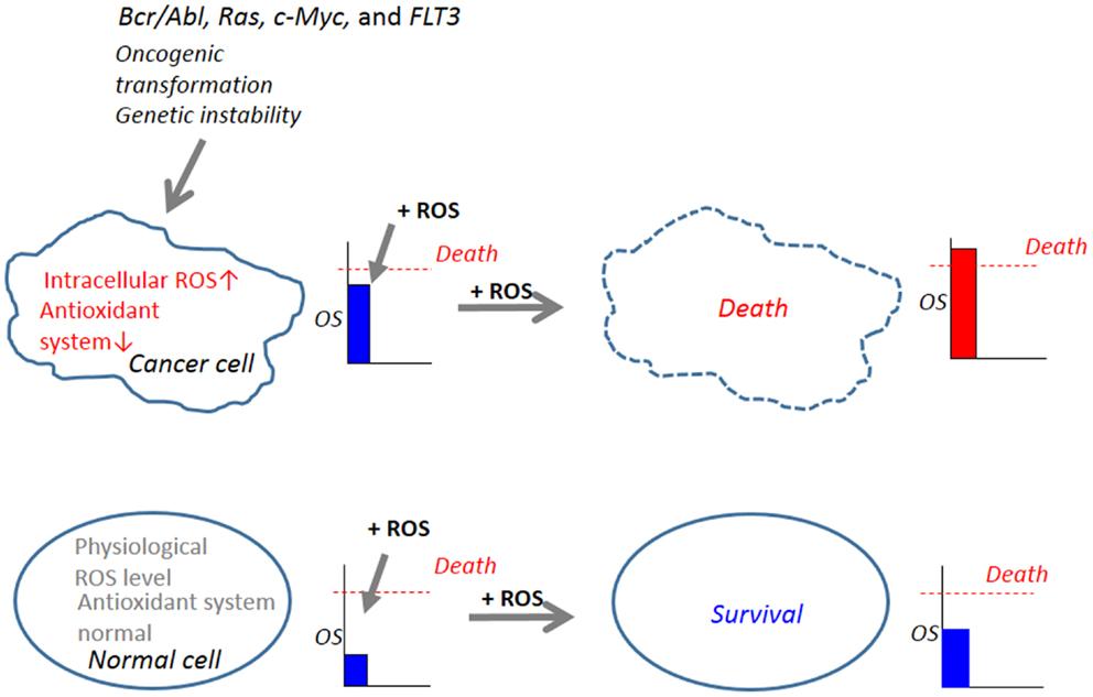 Frontiers Depolarization Controls Trail Sensitization And Tumor