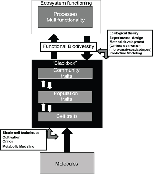 Essay the role of ecological theory in microbial ecology
