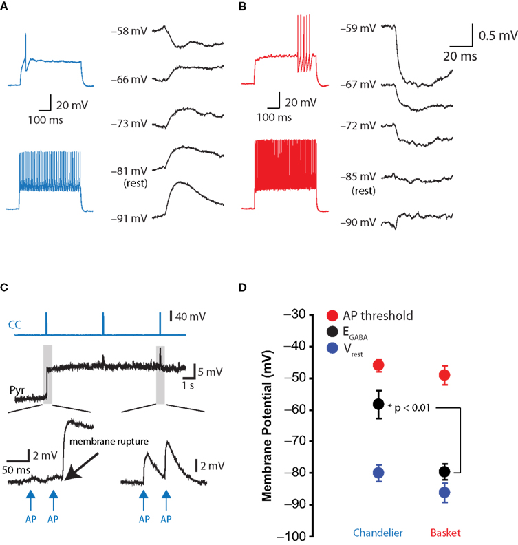 Frontiers depolarizing effect of neocortical chandelier neurons depolarizing effect of chandelier cells on pyramidal neurons in gramicidin recordings aloadofball Choice Image