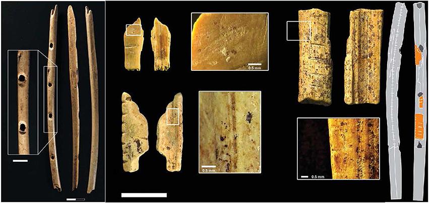 Güneybatı Almanya'daki Swabian Jura mağaralarında bulunan 40 bin yıllık flütler