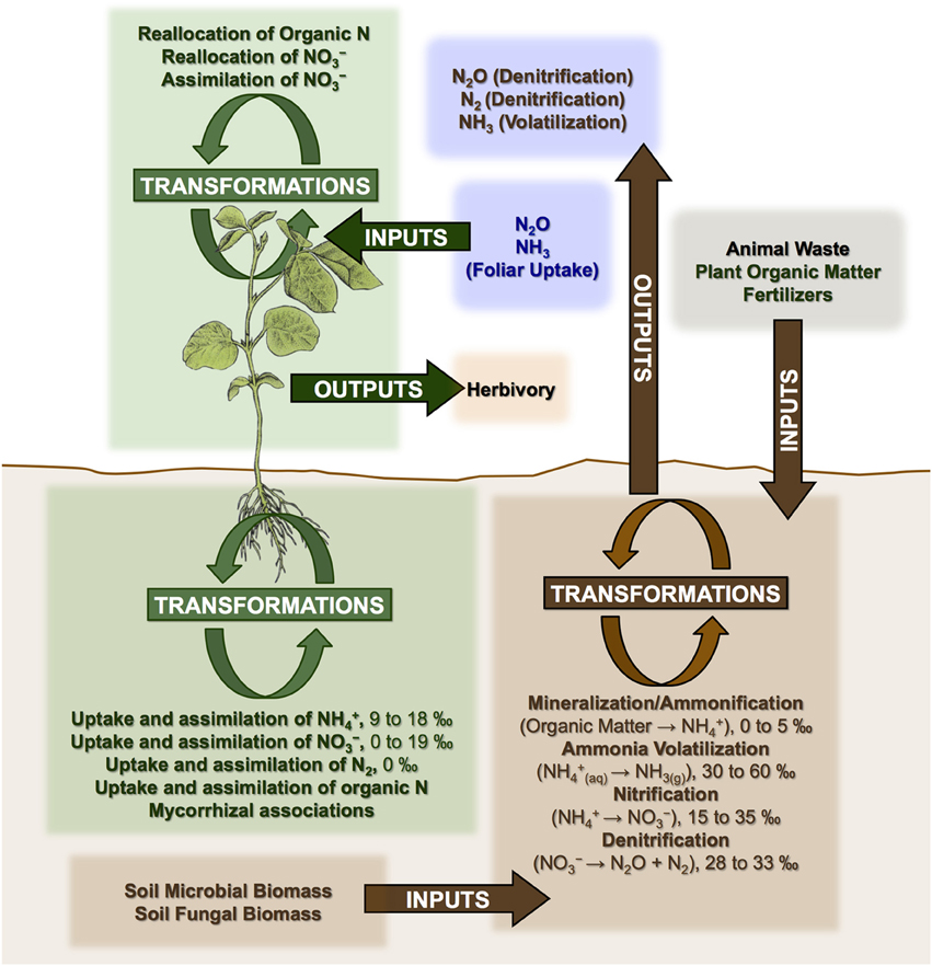 Frontiers | Complexities of nitrogen isotope biogeochemistry