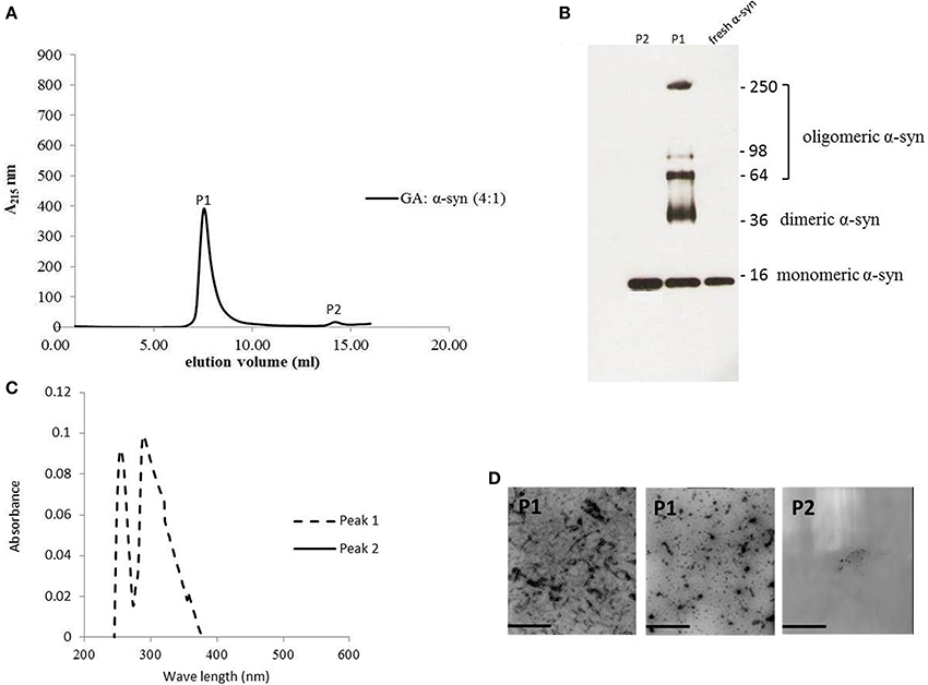 Frontiers | Structure activity relationship of phenolic acid