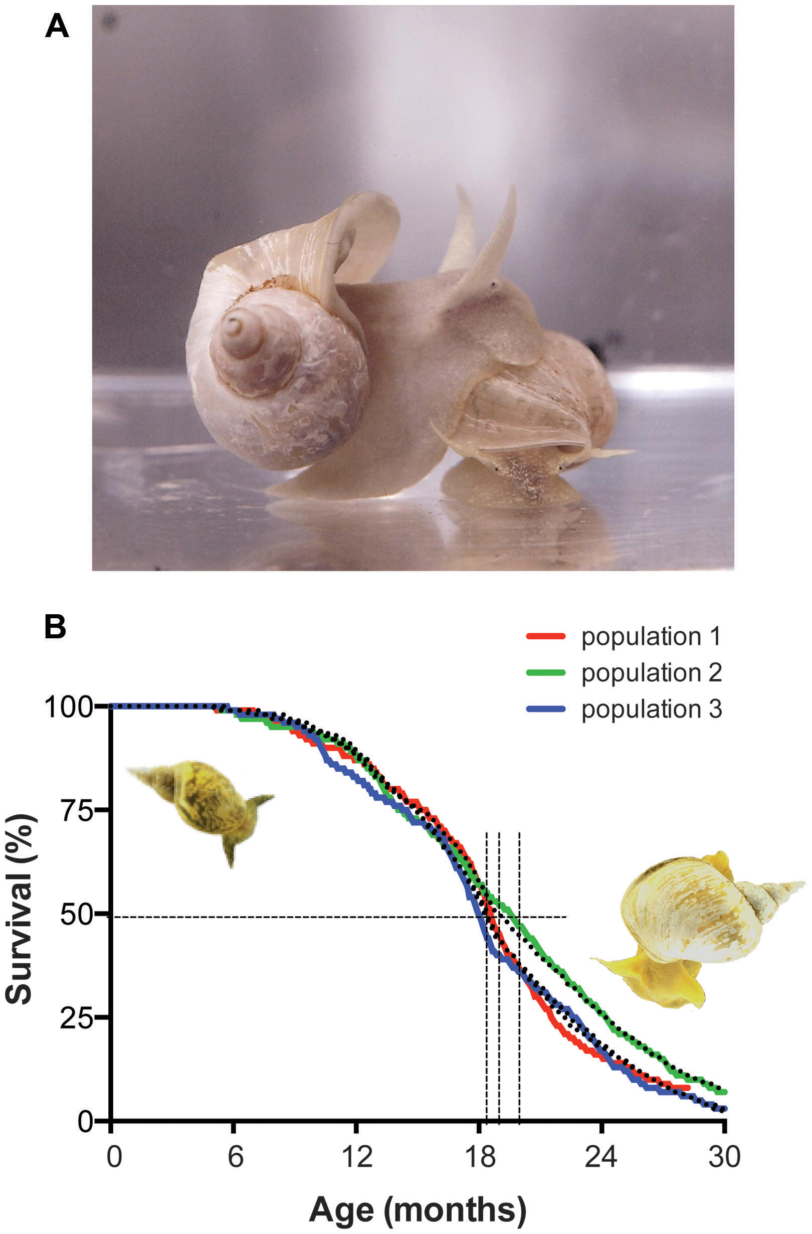 The Importance Of Identified Neurons In Gastropod Molluscs To >> Frontiers Phospholipase A2 Nexus Of Aging Oxidative Stress