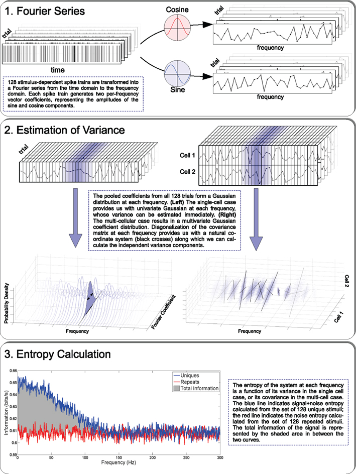 Frontiers   Estimating the Amount of Information Conveyed by a