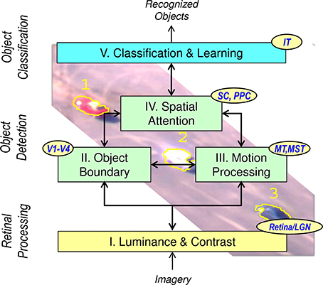 Frontiers | A neuromorphic system for video object recognition
