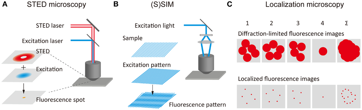 Frontiers | Super-Resolution Molecular and Functional