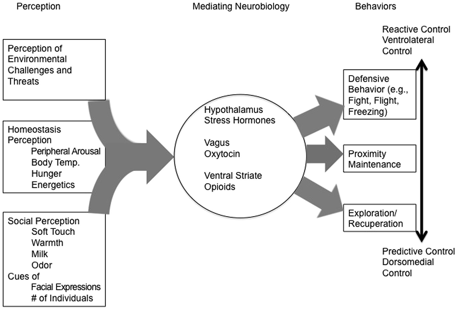 Frontiers Toward A Radically Embodied Neuroscience Of Attachment