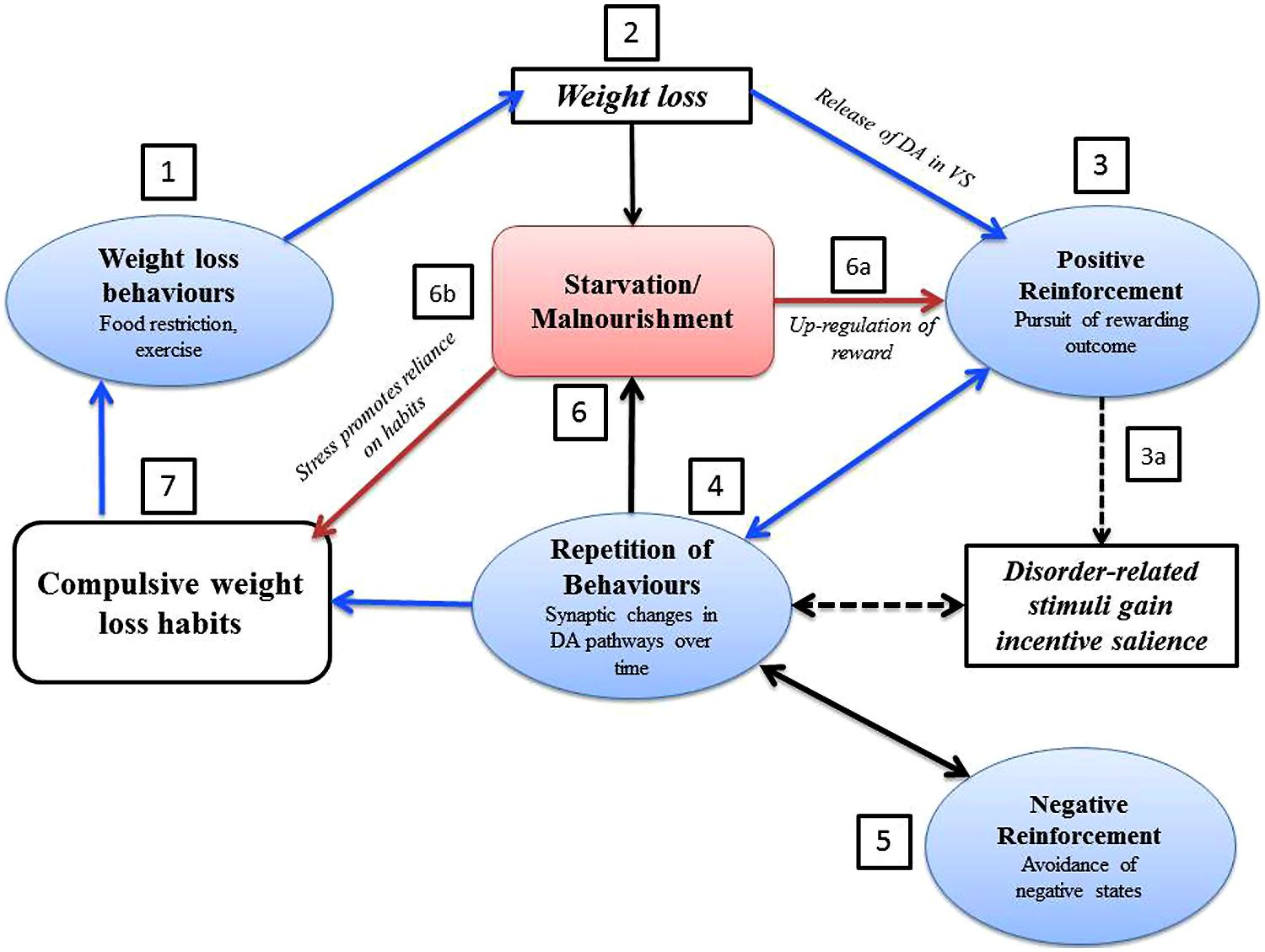 an analysis of the subject of eating disorders such as anorexia and bulimia The diagnostic criteria of anorexia nervosa in eating disorders (american  and  its disturbance in eating disorders has been the subject of a large number of stu-   also more specific ques- tionnaires on body image, such as the bsq (cooper.