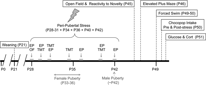 Risk seeking behavior men vs women
