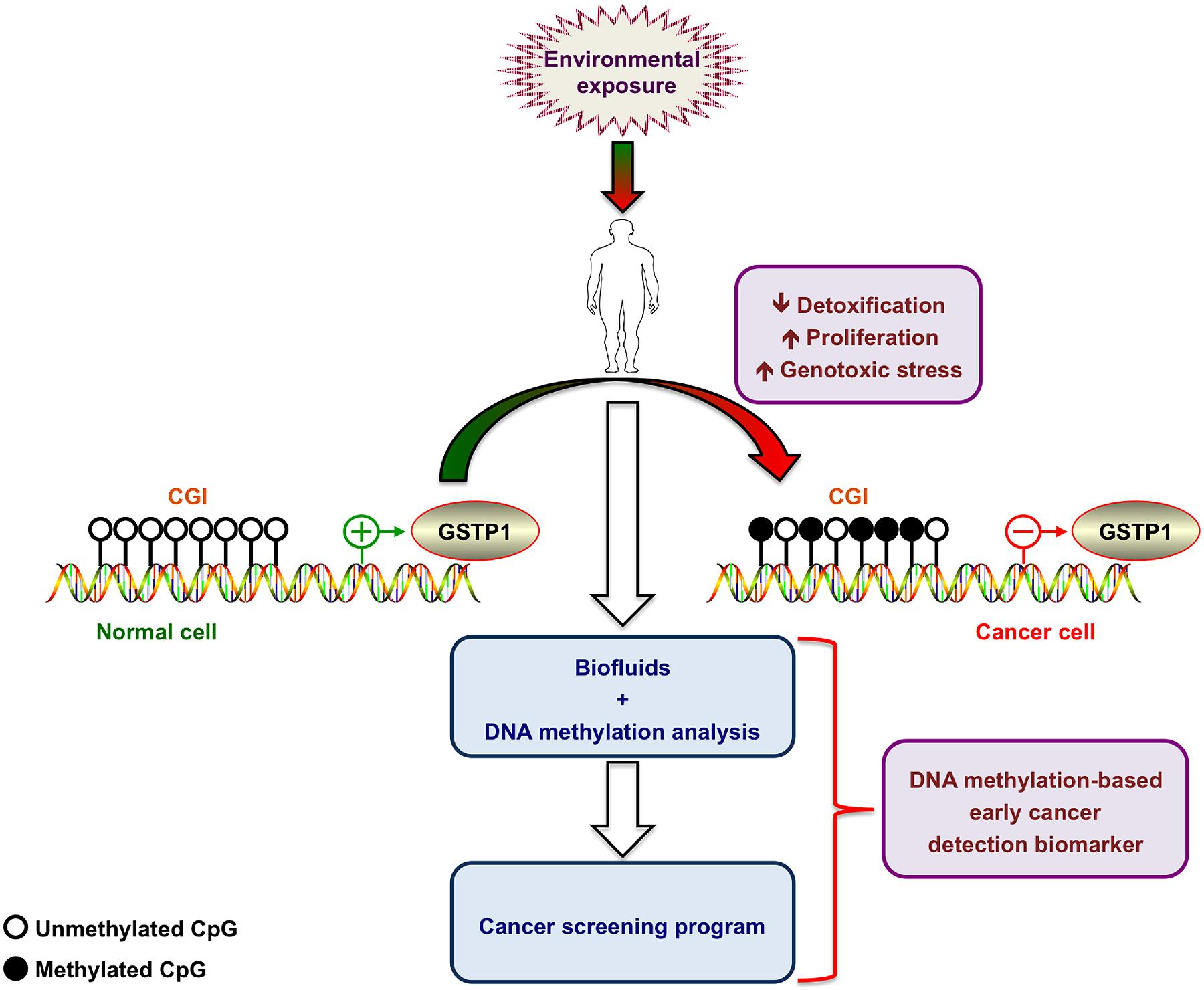 mtor inhibition for cancer therapy past present and future