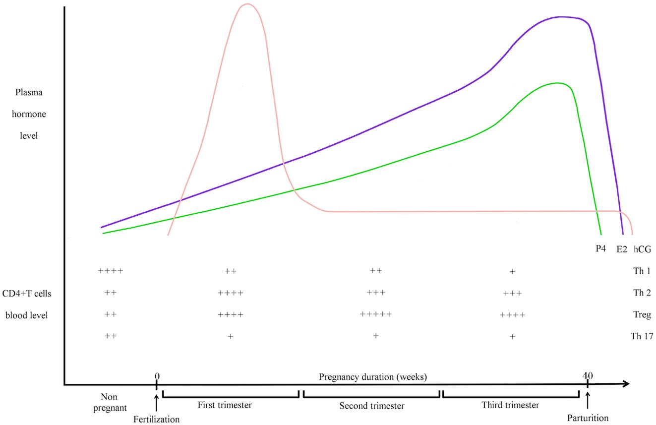 placental 11 beta hydroxysteroid dehydrogenase