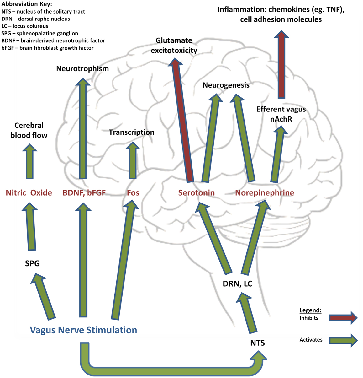 Frontiers | Vagus Nerve Stimulation in Ischemic Stroke: Old Wine in ...