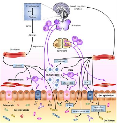 Frontiers | The Neuro-endocrinological Role of Microbial