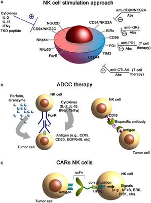 frontiers immunological  translational aspects  nk cell based antitumor immunotherapies