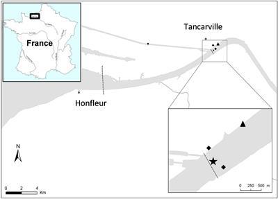 Frontiers Distinct Aeromonas Populations In Water Column