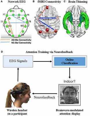 Frontiers | Tuning Up the Old Brain with New Tricks