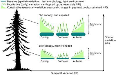 Frontiers   Spatial Variation of Leaf Optical Properties in