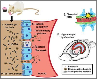 Dysbiosis magyarázta, Vizsgálat keresése