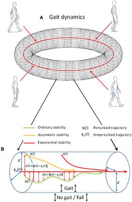 Frontiers | Fractional Stability of Trunk Acceleration
