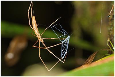The Idea of Biodiversity Philosophies of Paradise