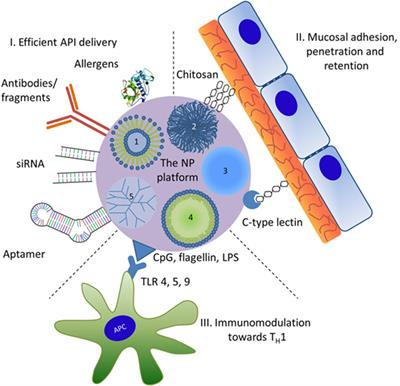 Frontiers | Nanomaterials in the Context of Type 2 Immune