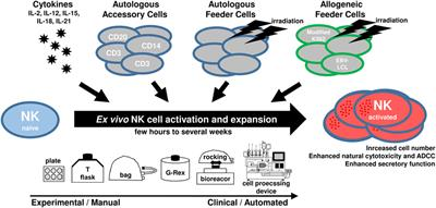 Frontiers | Shaping of Natural Killer Cell Antitumor