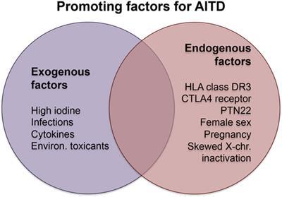 Frontiers Thyroid Autoimmunity Role Of Anti Thyroid Antibodies