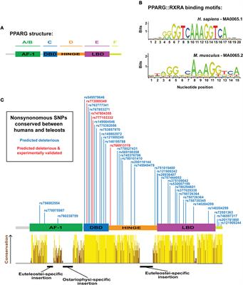 a study on the gene peroxisome proliferator activated receptor gamma pparg