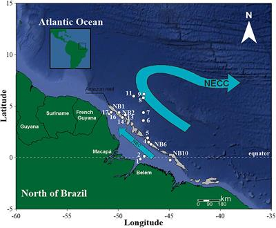 Frontiers   Zooplankton From a Reef System Under the Influence of