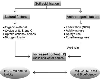 Frontiers | Aluminum, a Friend or Foe of Higher Plants in Acid Soils on
