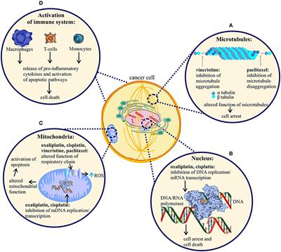 Frontiers Pathophysiology Of Chemotherapy Induced