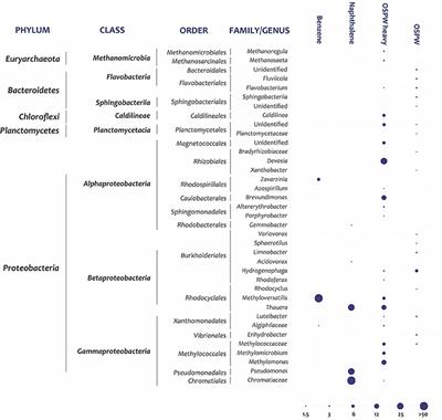 Frontiers | Benzene and Naphthalene Degrading Bacterial