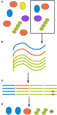 Frontiers | Analysing Microbial Community Composition through